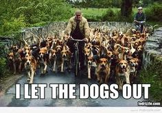 I let the dogs out!!!!!