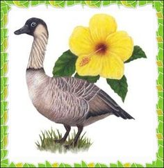The Nēnē or Hawaiian Goose is a species of goose endemic to the Hawaiian Islands. It is known as the official state bird of the state of Hawaiʻi. The Nēnē is found exclusively in the wild on the islands of Maui, Kauaʻi and Hawaiʻi.