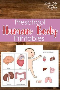 Jump into science with these adorable preschool human body printables Want to learn about the human body but don't know where to start? Get these preschool human body printables to teach your kids about their bodies. Body Preschool, Preschool At Home, Preschool Science, Preschool Lessons, Preschool Learning, Science For Kids, Learning Activities, Teaching Kids, Free Preschool