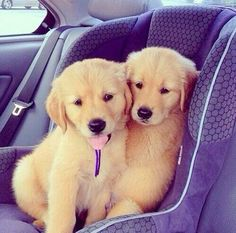 cute couple puppies