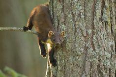 23 Breathtaking Photos Of British Wildlife Beinn Eighe Scotland