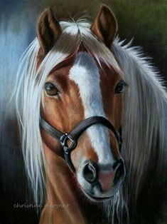 painting a day demonstration horse eye by roberta roby baer psa watch the whole video wow. Black Bedroom Furniture Sets. Home Design Ideas