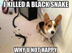 Naughty cute dog haha