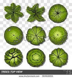 Set of Trees top view for landscape design- vector illustration Landscape Architecture Drawing, Landscape Design, Landscape Plans, Architectural Trees, Trees Top View, Evergreen Bush, Tree Plan, Landscaping Trees, Tree Sketches