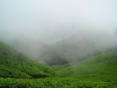Munnar is One of the main attraction of Kerala. Every Year Munnar attracts thousands of tourists with its breathtaking beauty. The highlight of Munnar is its mesmering greenary, mountain scenary calmness and cool refreshing air with very good climate. The temperature in munnar range from 0 c to 25 c.
