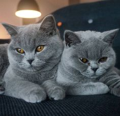 Follow of the pawsome adventures of Moes and Mattie, British shorthair cats from Rotterdam