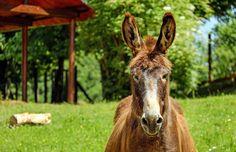 donkey desktop nexus wallpaper - donkey category