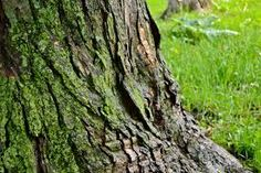 Image result for tree trunk
