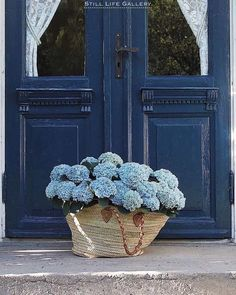 """Imagine if a beautiful basket of blue hydrangeas landed at your door 💙⠀ ⠀ Well it may be winter in Australia but in Norway the hydrangeas…"""