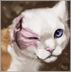 Brightheart--white she-cat with ginger patches. by ashkey.deviantart.com on @deviantART