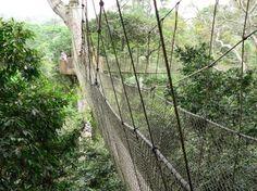 canopy walk, ghana :)