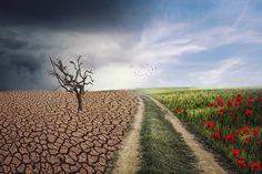 Bill Gates: 6 dôsledkov teplejšej klímy World Environment Day, Sea Level Rise, Climate Change Effects, Greenhouse Gases, Will Turner, Global Warming, Pathways, Ecology, Climate Change
