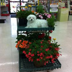 Cutest Little Ace Hardware Helper!