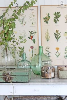 Botanical prints combined with glass bottles provide your home with a lovely hint of greenery. Spotted on Vibeke Design. Botanical Decor, Vintage Botanical Prints, Botanical Posters, Vintage Prints, Botanical Bedroom, Botanical Interior, Deco Floral, Arte Floral, Interior Pastel