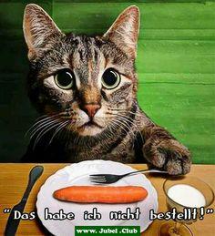 Deutschland gegen USA   Yoga Hamster   Pinterest   USA
