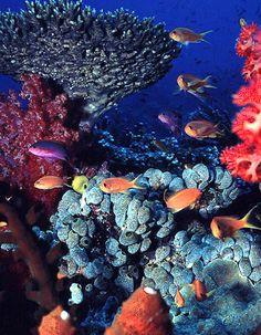 Matangi Island Resort, Matangi Island, Fiji diving, Fiji scuba diving, Fiji snorkeling, Fiji vacations