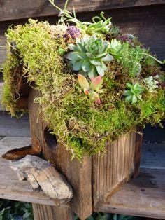 living roof birdhouse w/moss