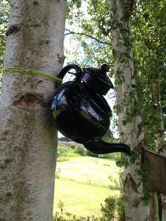 Tepotte hængt op på et træ, kan evt anvendes som et slagt foderbræt til fugle eller som fuglehus for den sags skyld - bare fordi det er sjovt og anderledes.