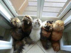 Mom, can we play outside, Pleeeeease?