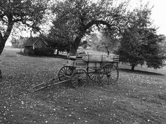 Our very own Apple Cart for photo opportunities beneath our beautiful apple trees. Apple Tree, Twins, Cart, Sidewalk, Outdoor Decor, Wedding, Beautiful, Covered Wagon, Valentines Day Weddings