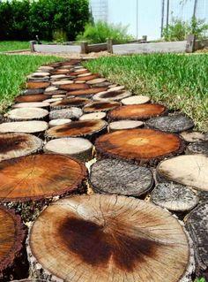 Holzscheiben aus unterschiedlichen Holzarten