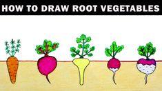 drawing vegetables draw easy root step drawings cartoon coloring