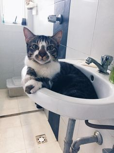 Pablo is ready for his shower by rawfinish cats kitten catsonweb cute adorable funny sleepy animals nature kitty cutie ca