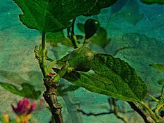 'figo - ficula' von ursfoto bei artflakes.com als Poster oder Kunstdruck $16.63