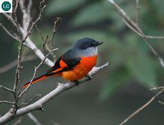 Pink Daisy, Cute Birds, Beautiful Birds, Bees, Decor Ideas, Facebook, Gray, Nature, Little Birds