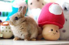 Bunny found a Super Mushroom! - May 13, 2012