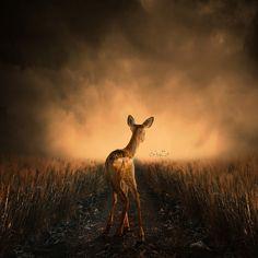 "500px / Photo ""Strange feeling"" by Caras Ionut"