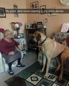 Best listener. Great Dane.