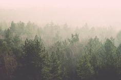 Retro forest fototapet/tapet fra Happywall