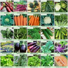 Time to start my veggie garden! Over 50 varieties - found this coupon code TINYPLOT - save 20% expires 9/11/14