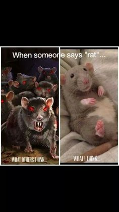 When someone says rat...