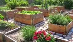 Rock paths and raised beds Raised Flower Beds, Raised Garden Beds, Raised Gardens, Raised Beds, Edible Plants, Edible Garden, Patio Pergola, Balcony Flowers, Vegetable Garden Design