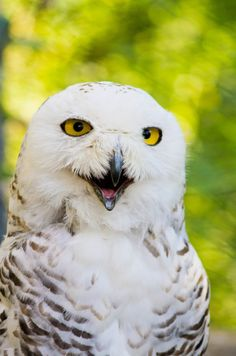 2014 may be the season of the Snowy Owl.  They are showing up in the oddest places.  Check it out and see if they have landed in your neighborhood.