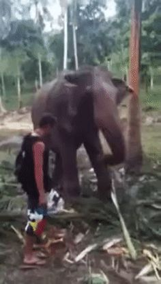 Never touch an elephant's trunk without asking.