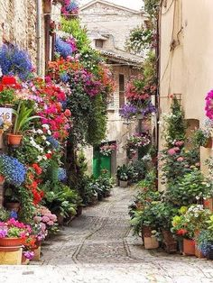 Spello flower festival ~ Umbria, Italy- This is one thing that I loved doing when walking down the streets of Citta Di Castelo, Italy. Looking at all the beautiful flowers. Can I move to Italy? Beautiful Streets, Beautiful Gardens, Beautiful Flowers, Beautiful Places, Beautiful Pictures, Gorgeous Gorgeous, Beautiful Dream, Stunningly Beautiful, Amazing Places