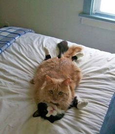 """19 Cats Who Had No Idea You'd Be Home So Early The caption says""""You could have at least knocked!"""""""