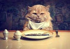 komik kedi kahvaltıda