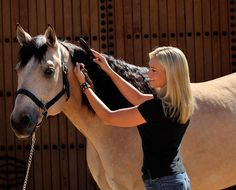 Oil works very well for healthy hair. Get Grooming: A Regular Routine is Part of Good Horsekeeping Horse Braiding, Horse Care Tips, American Quarter Horse, Horse Grooming, Western Pleasure, All About Horses, Horse Ranch, Horse Barns, Horse Love