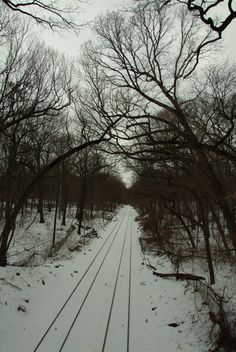 childhood memory: when we went with our Dad to cut fire wood, his teaching us to lay a penny on the train tracks so that, next time we visited, we would find the penny flattened by a train. he also taught us to put our ear to the track to listen if a train was coming-perhaps an old boy scout trick? Forest Park, Queens, NY