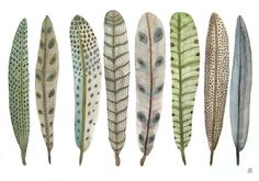 Fanciful Feather Collection No. 10 .