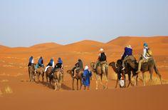 The best dunes for Morocco Camel Trekkingare the Erg Chebbi or Erg Chegaga sand seas; together offer a exceptional desert understanding.