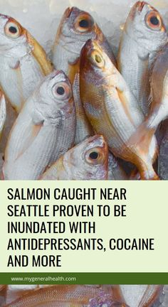 Salmon Caught Near Seattle Proven to be Inundated with Antidepressants, Cocaine and Natural Teething Remedies, Natural Health Remedies, Herbal Remedies, Health Benefits, Health Tips, Health And Wellness, Oils For Sinus, Health Tonic, Strep Throat
