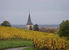 Wineries by Bike from Colmar, France in Alsace Region