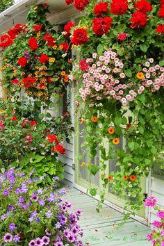 Love the color!! Aiken House & Gardens