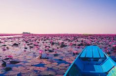 This gorgeous lake in Thailand is filled with bright pink lotus flower blooms that are just begging for a visit. | Photo Credit: Georgios Kaleadis