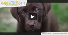 Geburtstagsgrüße - wundervolles Geburtstagsvideo mit einem süßen Hundewelpe und schönen Geburtstagslied.